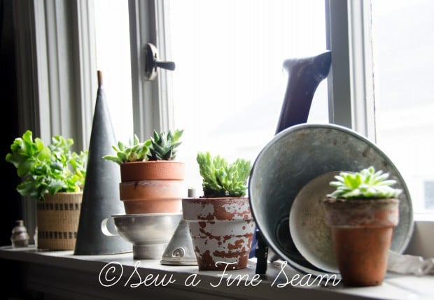 Succulents for the kitchen window sill-11