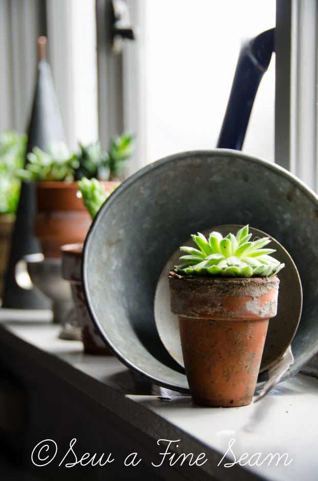 Succulents for the kitchen window sill-12