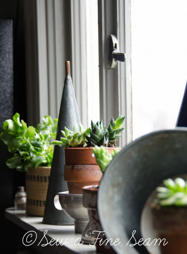 Succulents for the kitchen window sill-13