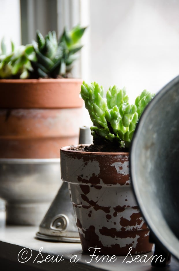 Succulents for the kitchen window sill-14