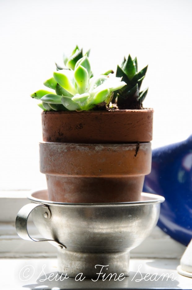 Succulents for the kitchen window sill-18