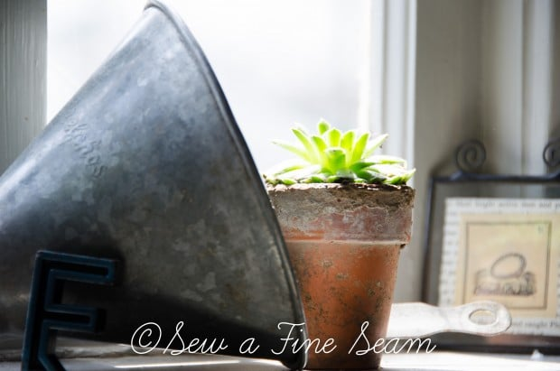Succulents for the kitchen window sill-19
