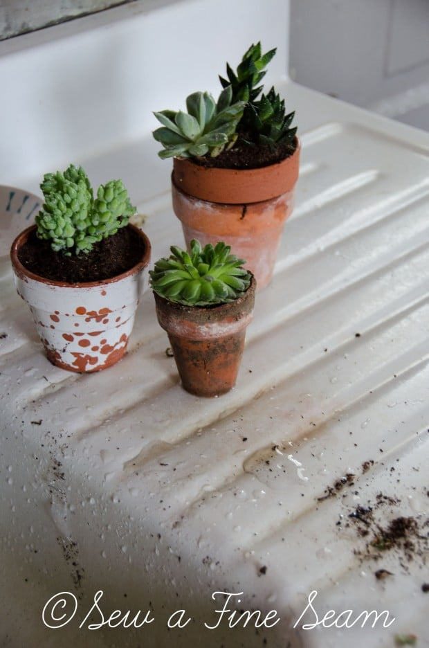 Succulents for the kitchen window sill-4