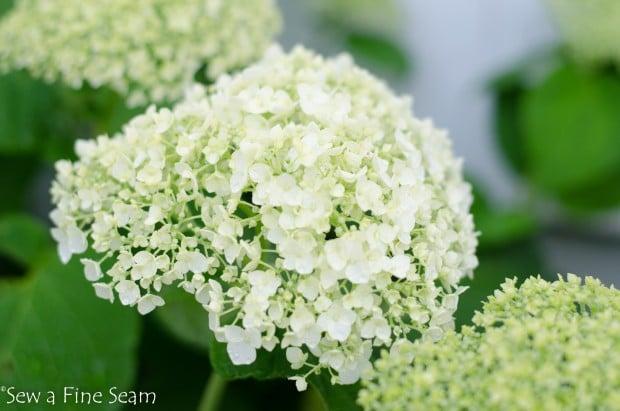 garden flowers 2014 (15 of 24)