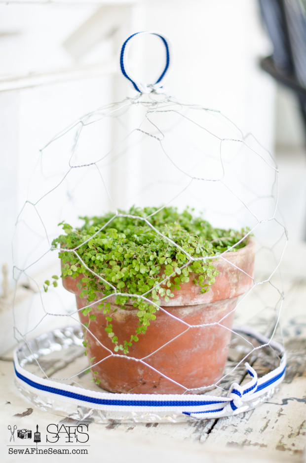 chicken wire cloche-18