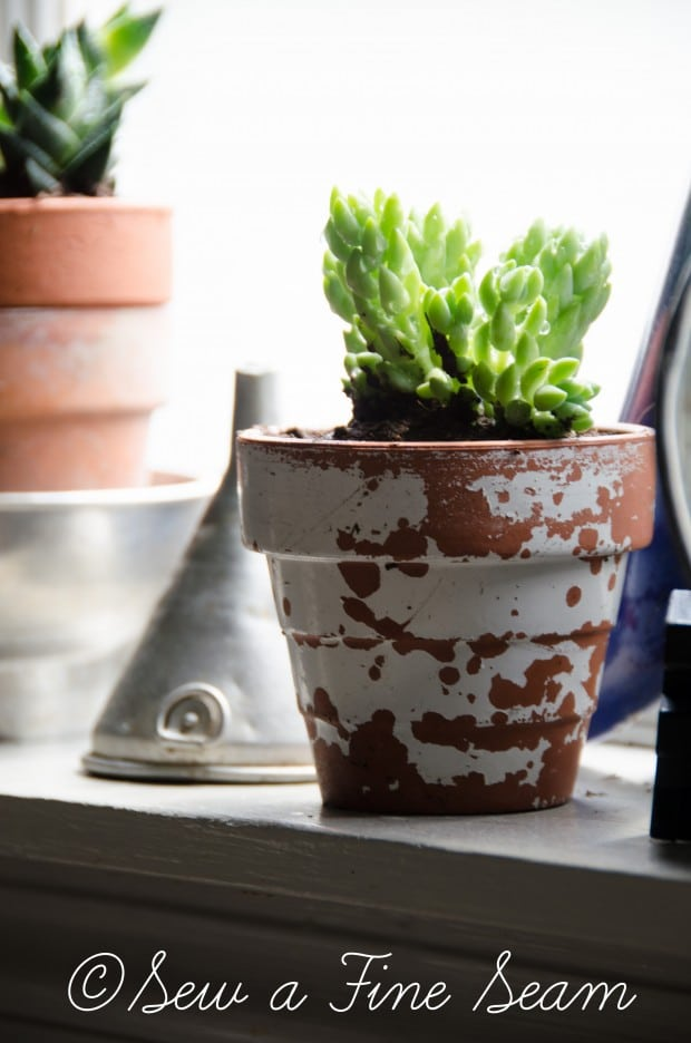 Succulents for the kitchen window sill-15